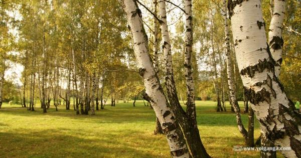 beautiful-trees-19