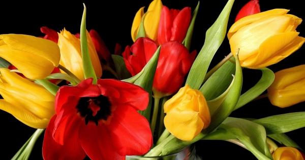 tulips-18