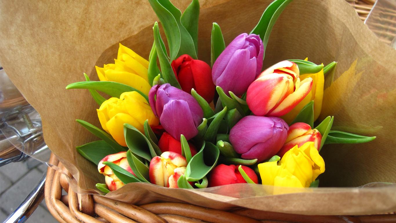 tulips-03