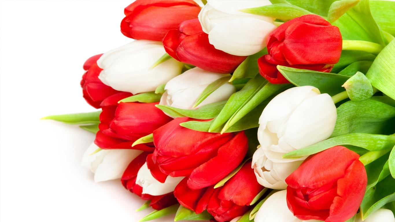 tulips-04