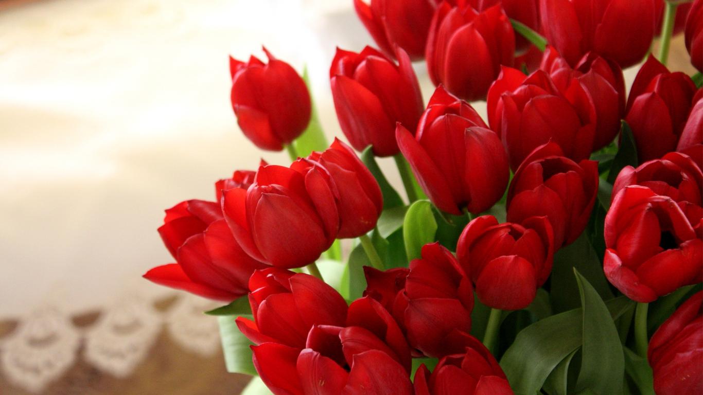 tulips-06