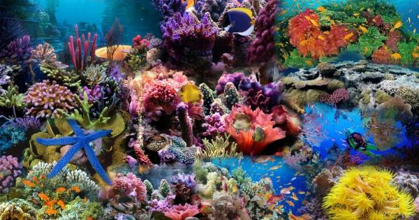 under-sea-05