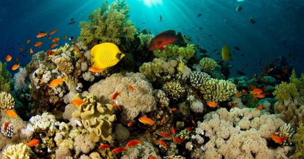 under-sea-07
