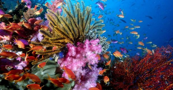 under-sea-10