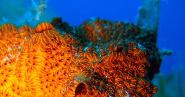 under-sea-11