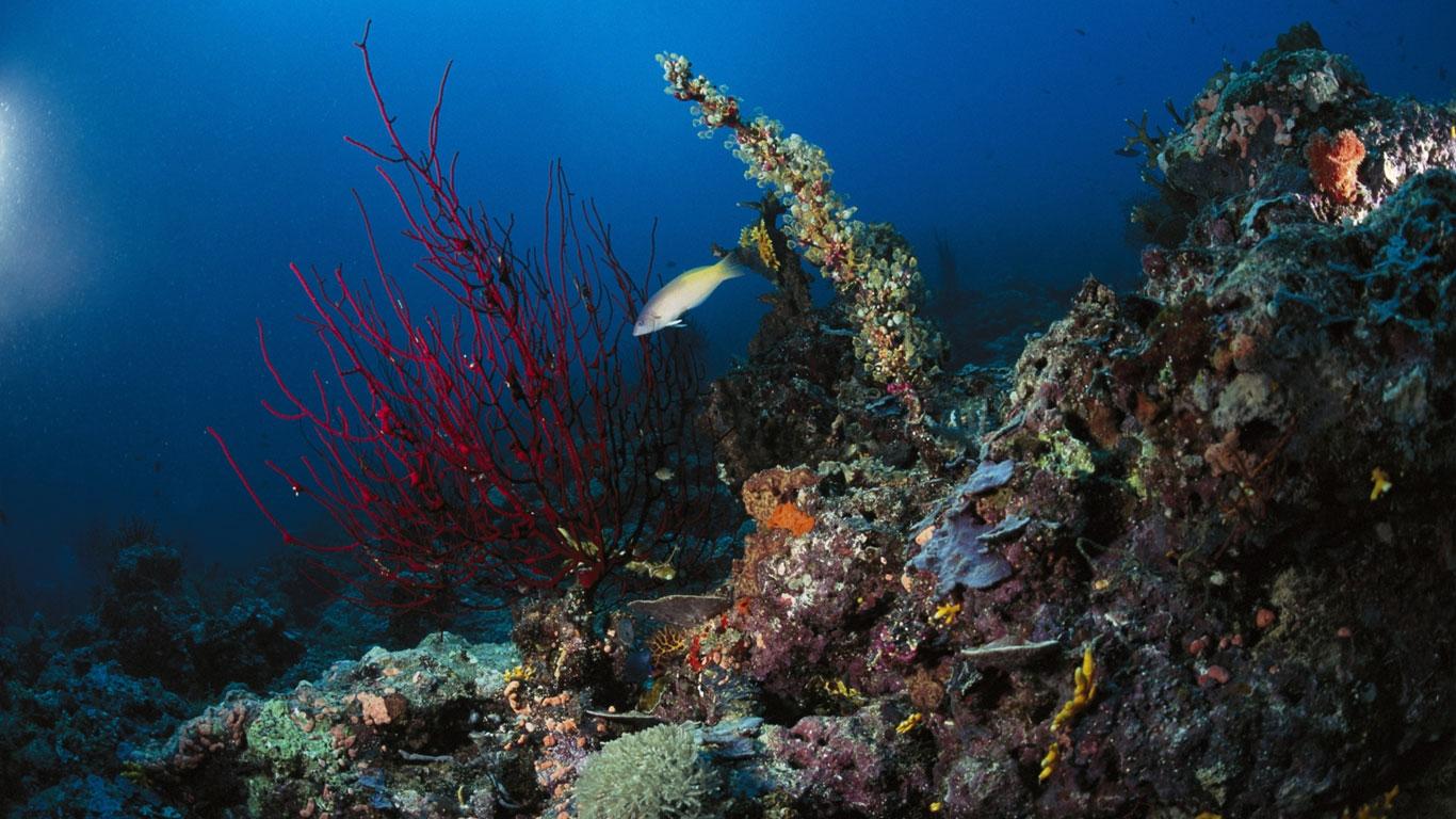 under-sea-03