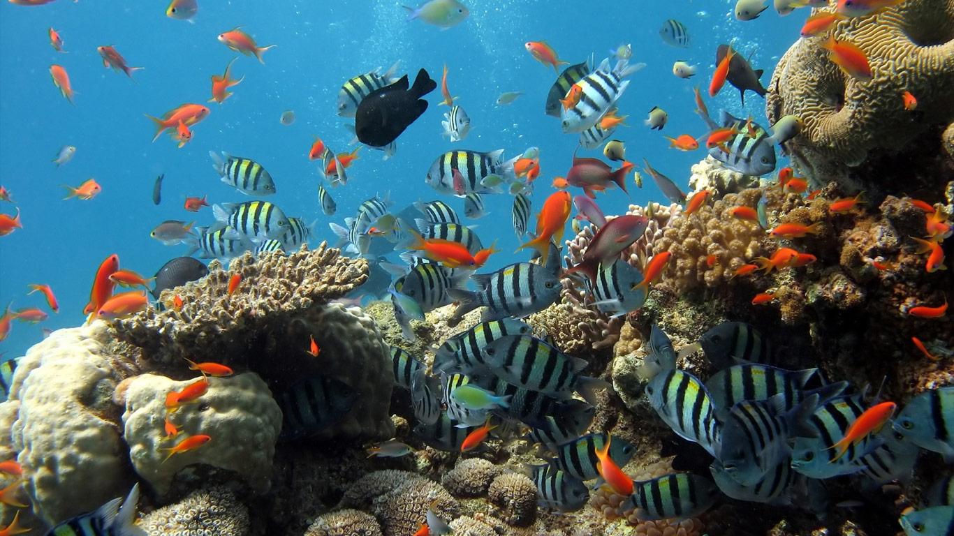 under-sea-08