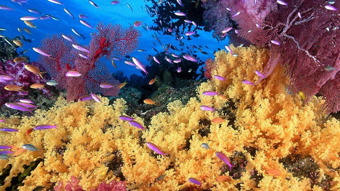 under-sea-09