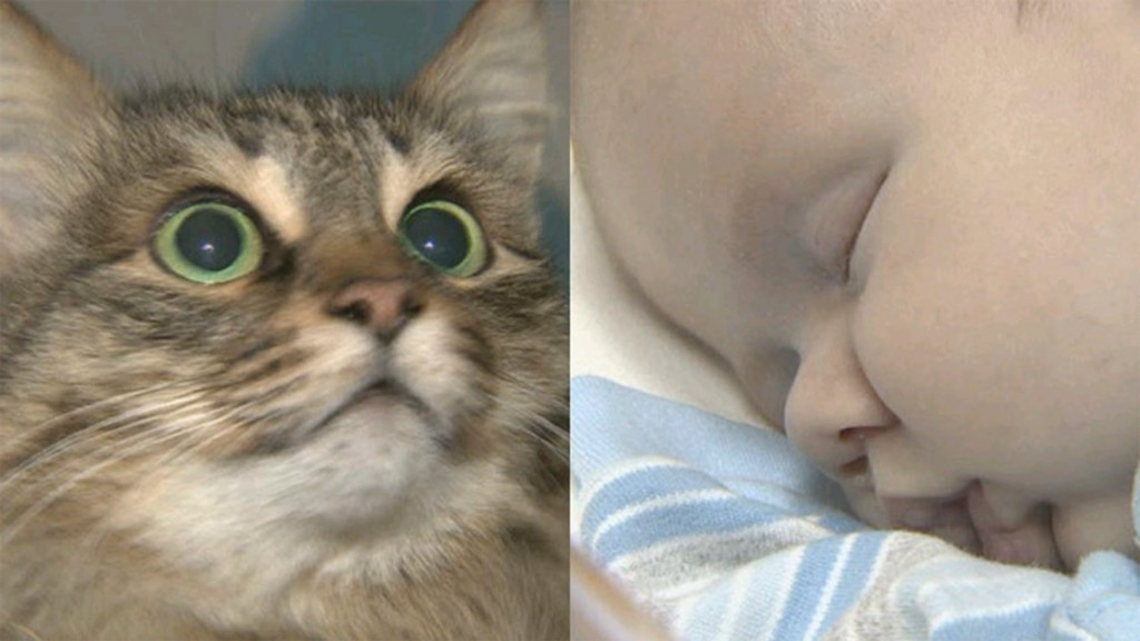 Cat Masha rescues an abandoned baby