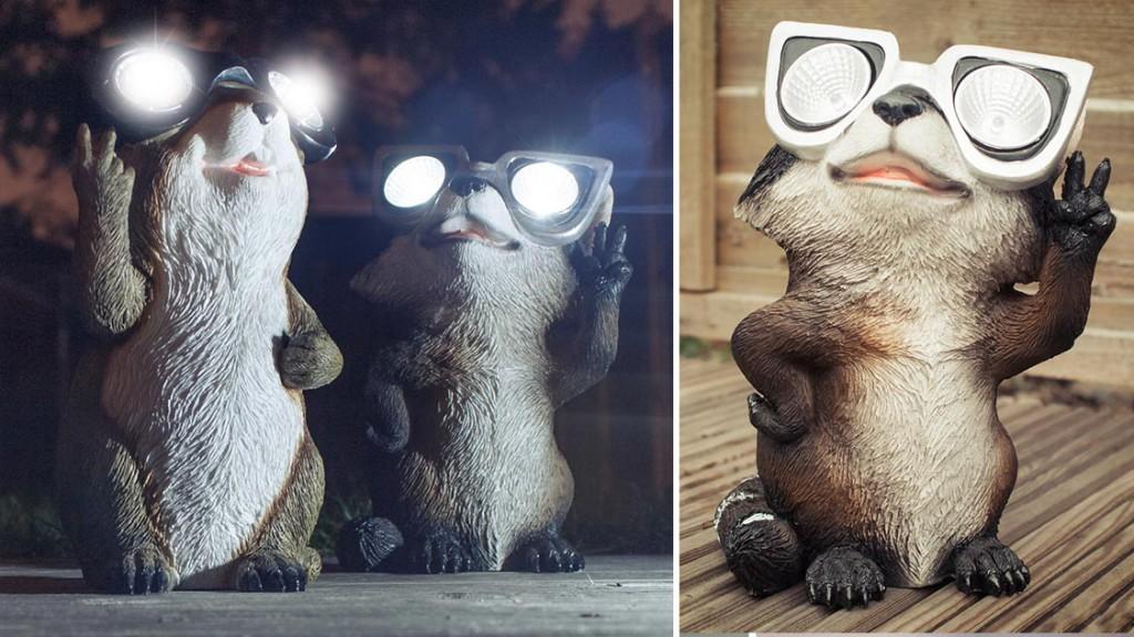 raccoon-light