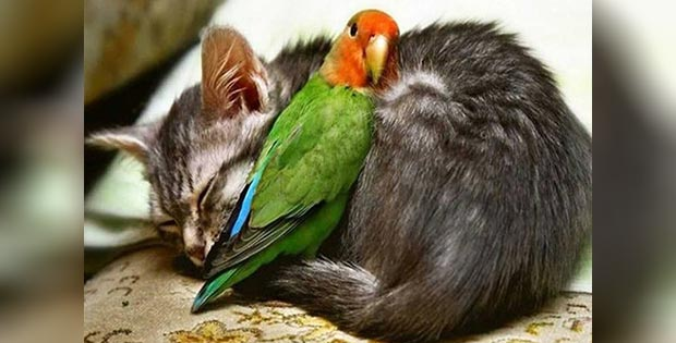 cat and parrot friendship