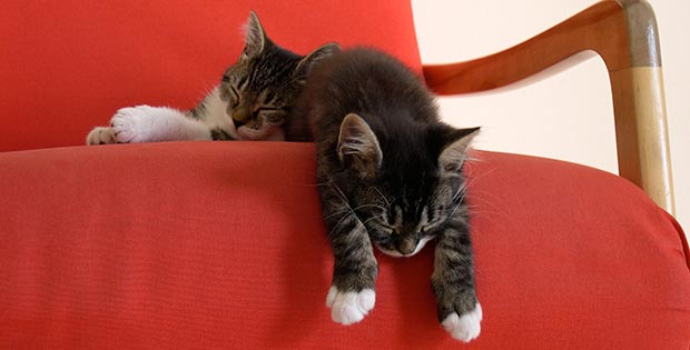 Cats sleeping in the armchair