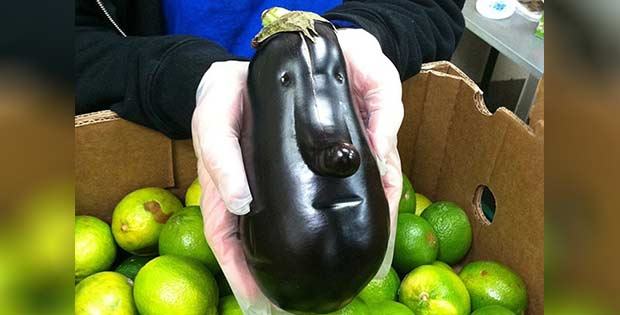 face-shaped squash
