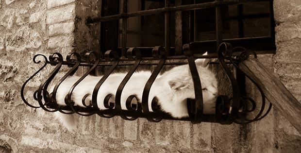 cat sleeping outside the window