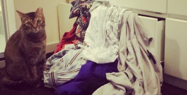 Seems like a laundry thief has visited us.