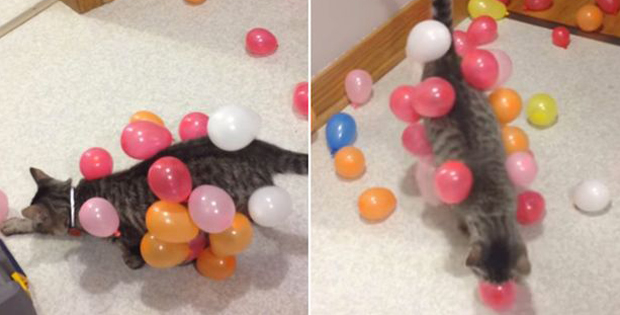Static Balloon Cat: Hilarious show