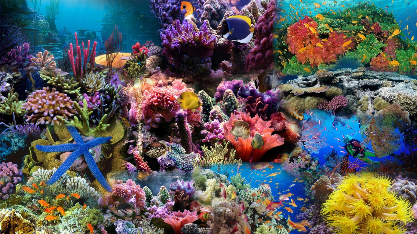Under Sea wallpapers 1366x768