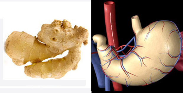 Ginger lowers risks of heart attack