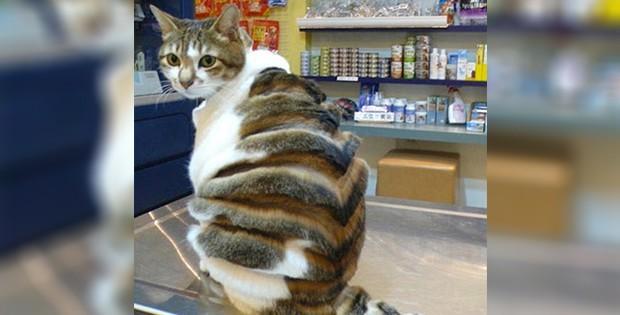 Awful cat haircut