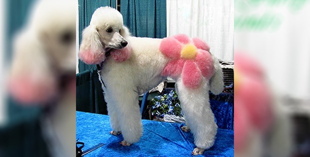 Creative dog haircut