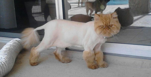 awful cat haircut