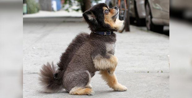 hilarious dog hairstyle