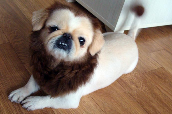 Hilarious Creative And Horrible Pet Haircuts And