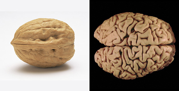 Walnuts improve brain work