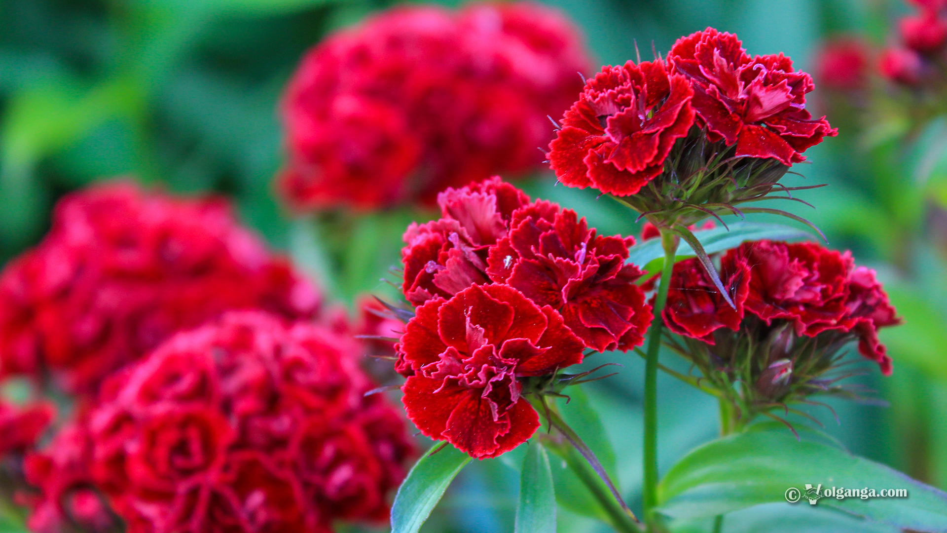 Awesome Garden Flowers Exclusive Hd Wallpapers Volganga