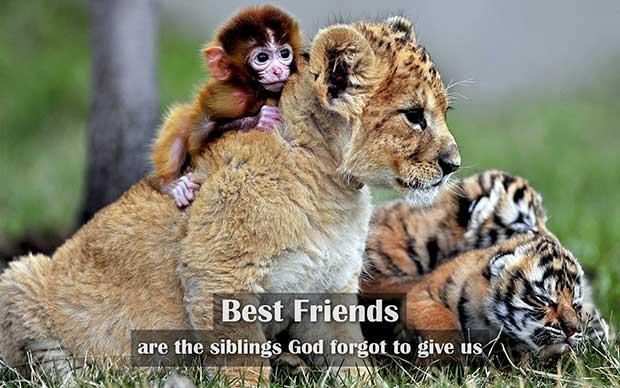 best_friends_quotes_09pr