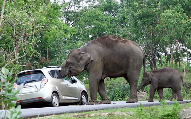 Elephant steals a bag from the tourists' car