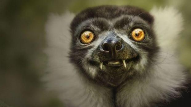 Cute smiling animal