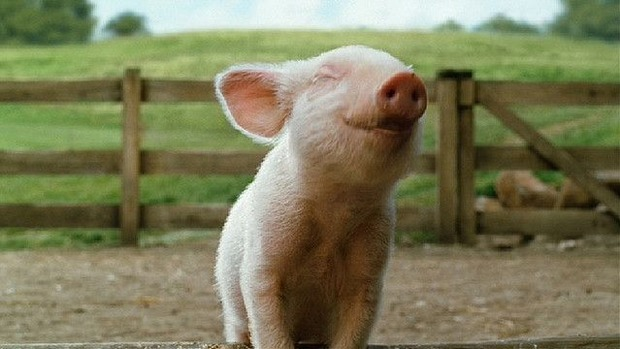 Cyte smiling animals. Piglet