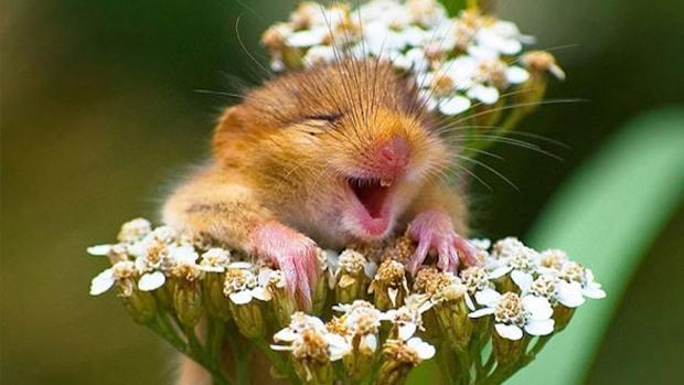 Cue smiling animals