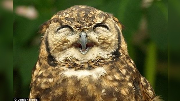 Cute smiling owl