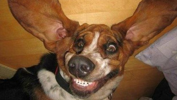 Hilarious smiling dog
