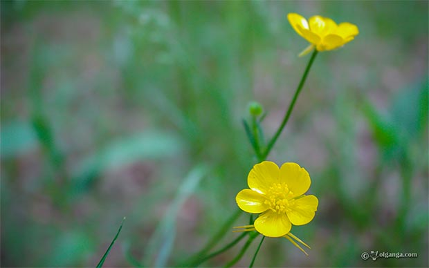 Beautiful field yellow flowers exclusive hd wallpaper