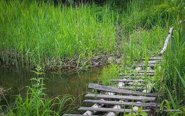 Generous Russian Nature HD wallpapers. wooden bridge over the forest brook
