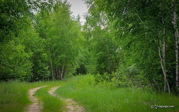 Generous Russian Nature HD wallpapers. Green trail
