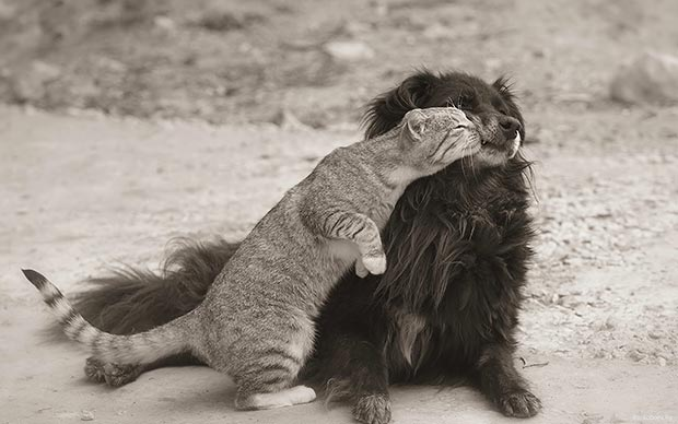 Wild life kiss: cat and dog