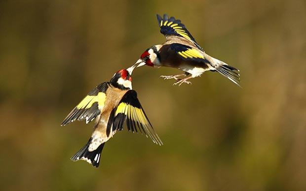 Wild life kisses: birds