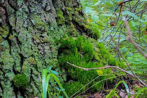 Soft moss on the tree foot