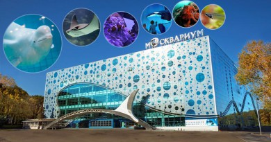 7 reasons to visit Moscow Oceanarium at VDNkh