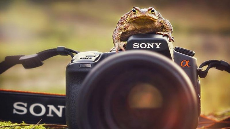 Toad on camera