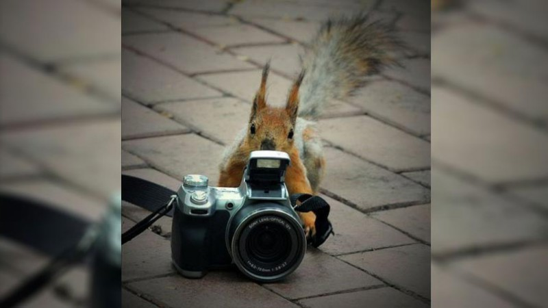 Squirrel with camers