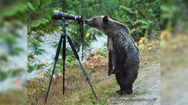 Bear staring at camera