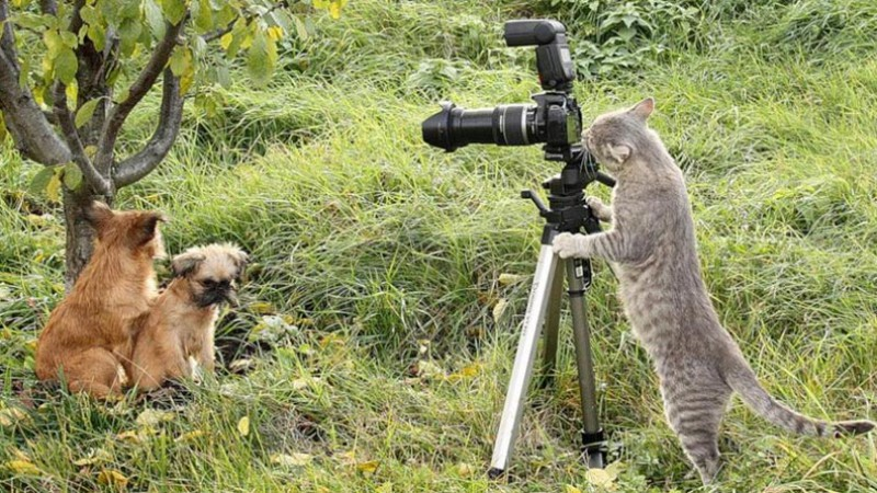 Cat taking picture with camera