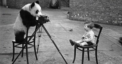 Panda bear taking photo of boy with camera