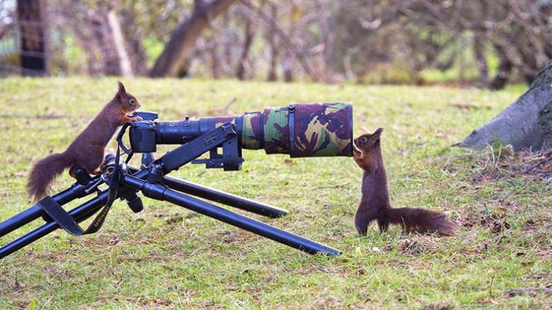Squirrels with camera