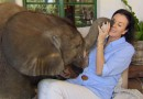 Moyo the baby elephant: incredible story of rescue